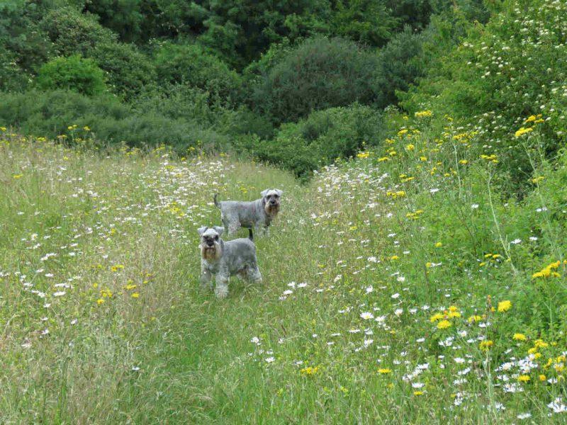 honden in de natuur